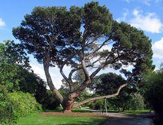 Kew Botanical Gardens (London)