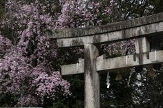 Nagaoka Tenman-gu 長岡天満宮 | A shrine in the west of Kyoto famous for its Sakura in Spring.