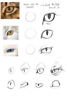 how to draw a cat image Cat Drawing Tutorial, Drawing Tips, Drawing Sketches, Cat Anatomy, Anatomy Drawing, Animal Anatomy, Animal Sketches, Animal Drawings, Pencil Art Drawings