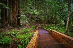 Prairie Creek Redwood State Park, Humboldt County  127011 Newton B. Drury Scenic…