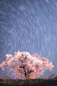 上発知のしだれ桜  #桜 #CherryBlossom