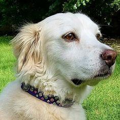 Swarovski Martingale Dog Collar ~ designed for Teri's Gracie ~ PinUp Pups - Collars By Kitt