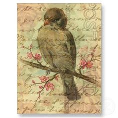 Vintage Sparrow Postcard by angelandspot