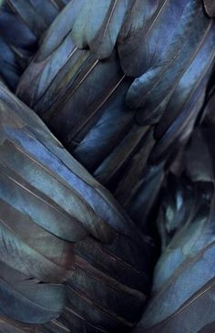Crow feathers - The feathers symbolise balance, a release from past beliefs, skillful and cunning.