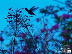 Fly Away Home, by Natalia Torrealba - I took this picture in a warm evening of July. My mind and heart was filled of deep emotions because my Mom passed away a couple months ago. At that moment of loneliness, I remember that the only thing that made me feel close to her it was to take pictures in her favorite place, her garden, where birds and flowers enchanted the day.