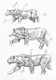 cheetah-anatomy-sketch-Smilodon hunting sequence sketch 1, Artist Sketchbooks , Study Resources for Art Students  CAPI ::: Create Art Portfolio Ideas at milliande.com, Art School Portfolio, Sketchbook, How to Draw Animals, Sketching, Animals, Cat, Big