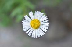 A Beautiful Wild Flower On The Roadside