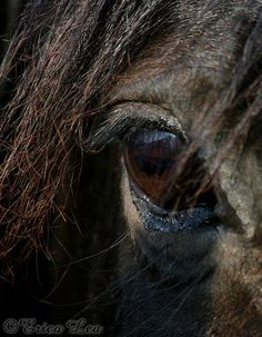 Black Horse Eye Photo, macro photography, equine art, western decor, horse photography, 5x7 8x10 11x14 print