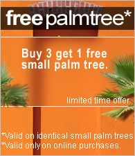 Palm Tree Florida Trees European Fan Whole Plant Nursery