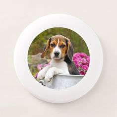 Cute Tricolor Beagle Dog Puppy Pet in Milk Churn ' Wham-O Frisbee - animal gift ideas animals and pets diy customize