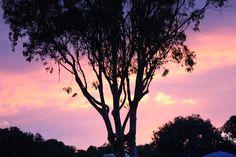 Campground reviews: Pismo Beach, CA