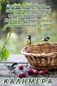 Greek Quotes, Bird, Home Decor, Mood Boards, Christianity, Cottage, Gifts, Color, Bedrooms