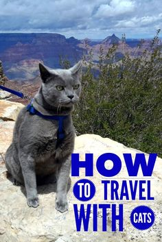 How to travel with a cat. Advice for road trips right from the kitty's mouth. What to bring, and how to prepare for a smooth trip with your cat.