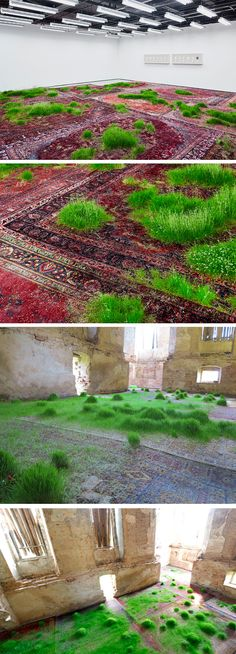A Temporary Lawn Planted Amongst a Patchwork of Persian Rugs