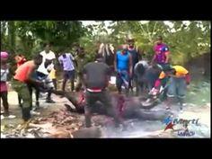 En Cuba se hace lo inconcebible para contrarrestar el hambre (VIDEO) - http://www.notiexpresscolor.com/2016/11/04/en-cuba-se-hace-lo-inconcebible-para-contrarrestar-el-hambre-video/