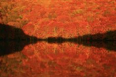 Nature Images, Nature Photos, City Photography, Nature Photography, Beautiful World, Beautiful Places, Aomori, Colorful Trees, Natural Scenery