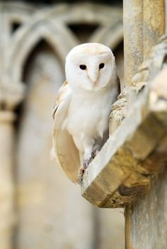 It is a beautiful owl and the stone is lovely. I believe that the owl is very well camouflaged. Description: White owl by Lee-Anne Beautiful Owl, Animals Beautiful, Owl Bird, Pet Birds, Baby Animals, Cute Animals, Wild Animals, Tyto Alba, Tier Fotos
