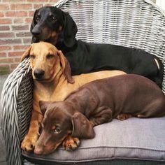 Best friends! @teckelkennel_blackpalace