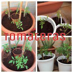 Evolución del huerto   Plantas Plantar, Gardens, Vegetable Garden, Flower Pots, Friday, Friends, Hair, Photos