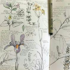 Super Plants Sketch Flora Ideas – a. Nature Sketch, Nature Drawing, Doodle Inspiration, Sketchbook Inspiration, Journal Inspiration, Journal Ideas, Botanical Drawings, Botanical Art, Plant Sketches