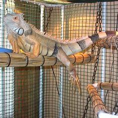 Indoor Iguana Cage - How to build an indoor iguana cage - Plans for building an iguana cage