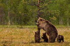 zo jongens klaar voor jullie eerste boomklim les?