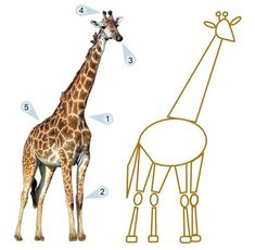 Drawing Giraffes, Draw Giraffe, Giraffe Guy, Giraffe Girafe Giraffe, Drawing Animals, Giraffe Photo, Blonde Giraffe, Funky Giraffes, Cartoon Giraffes