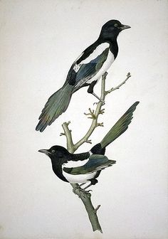 two magpies - this composition?