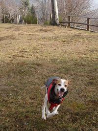 2007 Leda corre felice al Roccoletto una ventina di giorni dopo adozione
