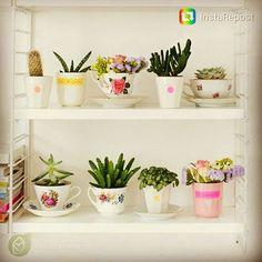 Aí como eu amo esses mini jardins de suculentas em xícaras fofas ♥ #repost #pinterest #remobilia #casadasamigas