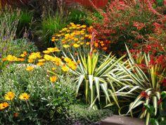 Arctotis, Yucca, Thymus, Lavandula,Lobelia Laxiflora & Pennisetum Messiacum - Debora Carl Landscape Design