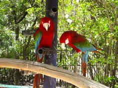 10 Fun Things to do in St. Maarten