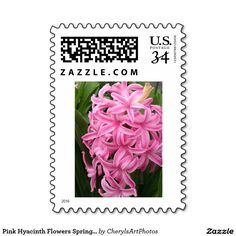 Pink Hyacinth Flowers Spring Postage Stamps - It's fun to share the first signs of spring. I like looking forward to seeing the pretty pink hyacinths pop up in my flower garden. Here is a photo for you to enjoy and to share on U. S. postage stamps.