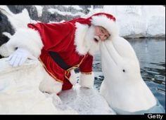 santa and beluga whale. aww. what a sweet looking whale.