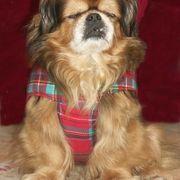 If you have a dog and you live in a cold climate, chances are your poor pup gets the chills when the weather cools off. Make quick and easy dog sweaters for your beloved companion, so you will always have something cozy to put on it when it's time to take a walk in the brisk air. You can even make several of these coats for your dog, so it can be...