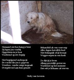 Ook dieren kennen angst Change Your Mind, You Changed, Mindfulness, Dogs, Animals, Animais, Animales, Animaux, Pet Dogs