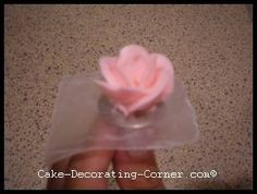 second layer of rose petals