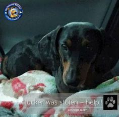 **** SILVER PAW ALERT - TUCKER WAS STOLEN ****  Tucker went missing from Waverly Woods Shopping Center in Woodstock MD. Dog trackers believe he was picked up by someone. Please like & share his page https:// www.facebook.com/helpbringtuckerhome so I can get my little boy home. He may have been taken out of the area.  Please help get the word out Gang. Awareness is the first step. Like, share and communicate any info you know with his owner, Sue Young. Let's help get him home.