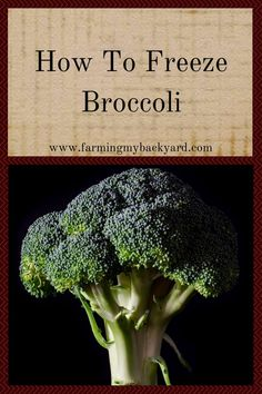 Freezing broccoli is pretty easy. The only downside is that broccoli does need to be blanched before you can freeze it. Fortunately, blanching is easy! Blanching Broccoli, Freezing Broccoli, Freezing Fruit, Freezing Vegetables, Canning Vegetables, Frozen Vegetables, How To Freeze Broccoli, Freezing Lemons, Dehydrated Vegetables
