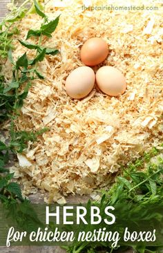 Use herbs in your chicken nesting boxes to provide all sorts of benefits! This post has the full list of the best herbs to use, too.