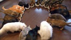 gatti a cerchio