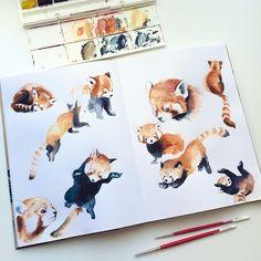 Julie Filipenko Watercolor speed practice In love with red pandas Watercolor Red, Watercolor Sketchbook, Watercolor Animals, Art Sketchbook, Panda Sketch, Panda Drawing, Cute Drawings, Animal Drawings, Panda Art