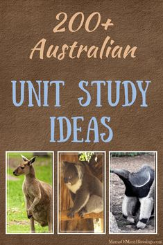 The best round up for your Australia unit study, unit, or Australia Day celebration. Australia For Kids, Australia School, Australia Crafts, Australia House, Western Australia, Australia Travel, Teaching Geography, World Geography, Teaching Kids