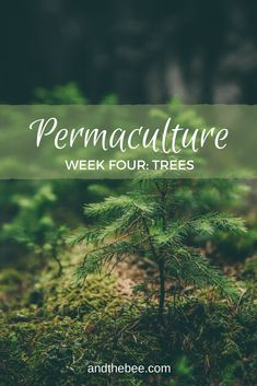 permaculture tree section uses for design