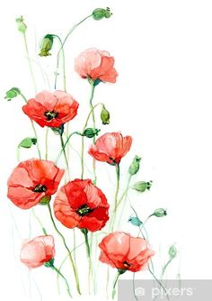 Watercolor Flowers Discover poppies (series C) Sticker Pixers - We live to change poppies (series C) Pixerstick Sticker - Poppy Flower Painting, Poppy Drawing, Acrylic Painting Flowers, Flower Art, Poppies Painting, Painted Flowers, Paintings Of Flowers, How To Paint Flowers, Watercolor Poppies