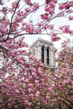 where to find the best cherry blossoms at notre dame in paris, france Paris France Travel, Paris Travel Tips, Europe Travel Tips, European Travel, Japan Travel, Travel Advice, Travel Guides, Travel Destinations, Strasbourg