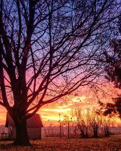Backyard Sunrise  #photography #photo #scenic #beautiful #landscape #sunrise #Michigan #puremichigan #outdoors #travel #light #nature #sun #tree #trees #country #countryside #farm #williamston #mi #sky