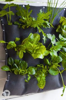 Shade cloth + cable ties and herbs = the easiest hanging herb garden! Herb Garden, Facebook Sign Up, Ties, Cable, Herbs, Cabo, Neck Ties, Tie, Herb