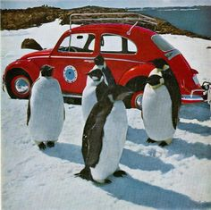 VW beetle in Antarctica 1963  photo © Ray McMahon  spiegel.de #penguins