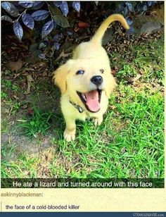 101 Funny Dog Memes Almost Guaranteed to Make You Laugh All Day 101 Funny Dog Memes Almost Guaranteed to Make You Laugh All DaySome would argue cats own the internet but dog lover's know that dogs rule th Funny Dog Memes, Funny Animal Memes, Cute Funny Animals, Funny Animal Pictures, Cute Baby Animals, Funny Cute, Funny Dogs, Dog Pictures, Funniest Animals